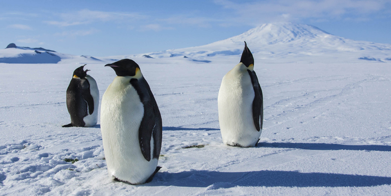 Antarctica Brings People Together