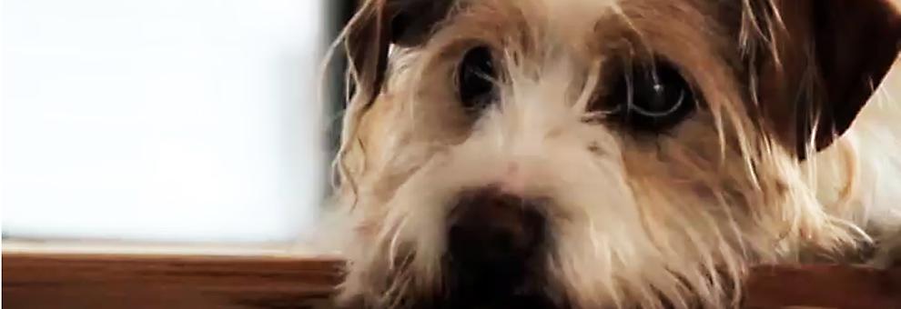 stetson street dog